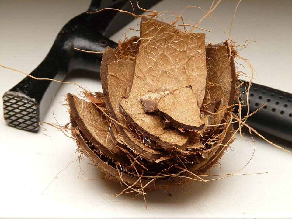 cáscara de coco