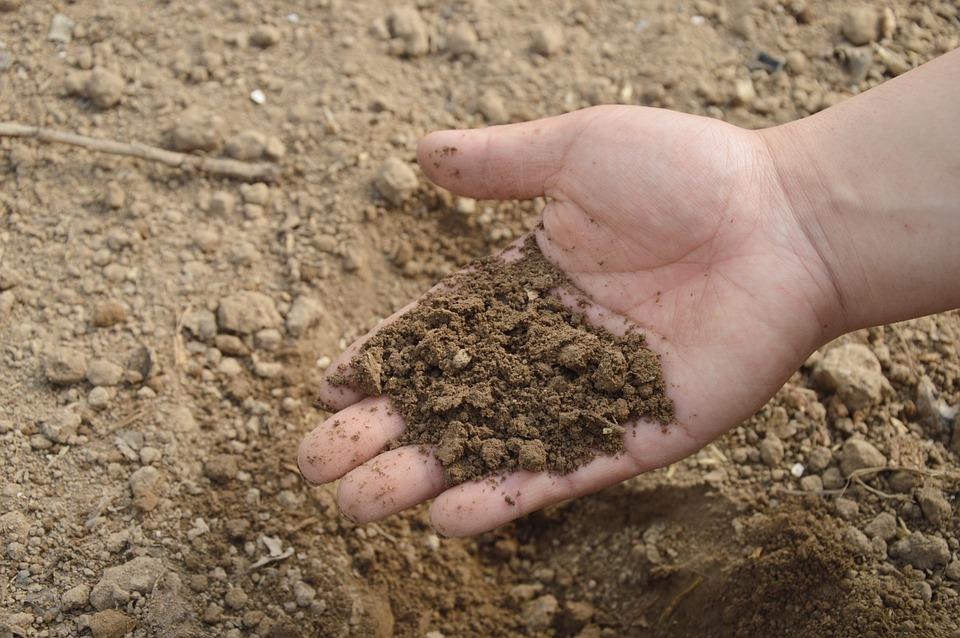 tierra y mano
