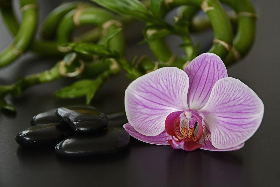 orquídea feng shui